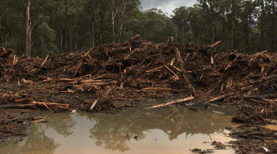 Warburton Environment Vs Vicforests